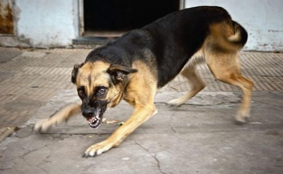 В Белореченске количество бездомных собак уменьшилось
